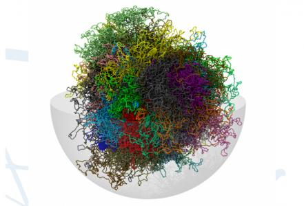 Ricercatori della SISSA di Trieste ricostruiscono modello tridimensionale del genoma umano